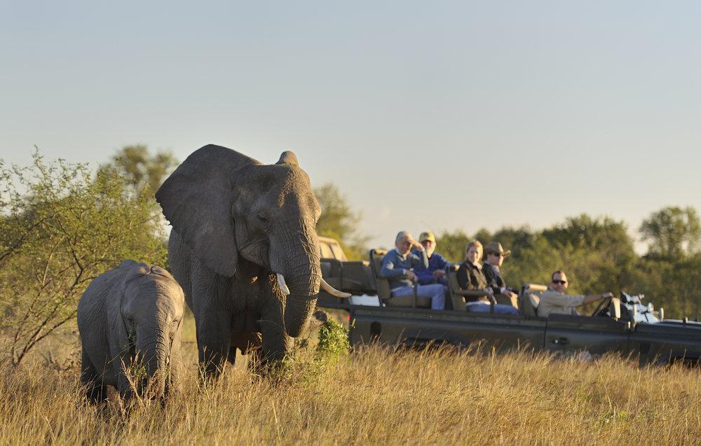 Safari Images (4).jpg
