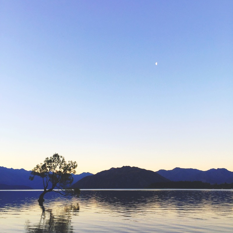 That Wanaka Tree, Wanaka