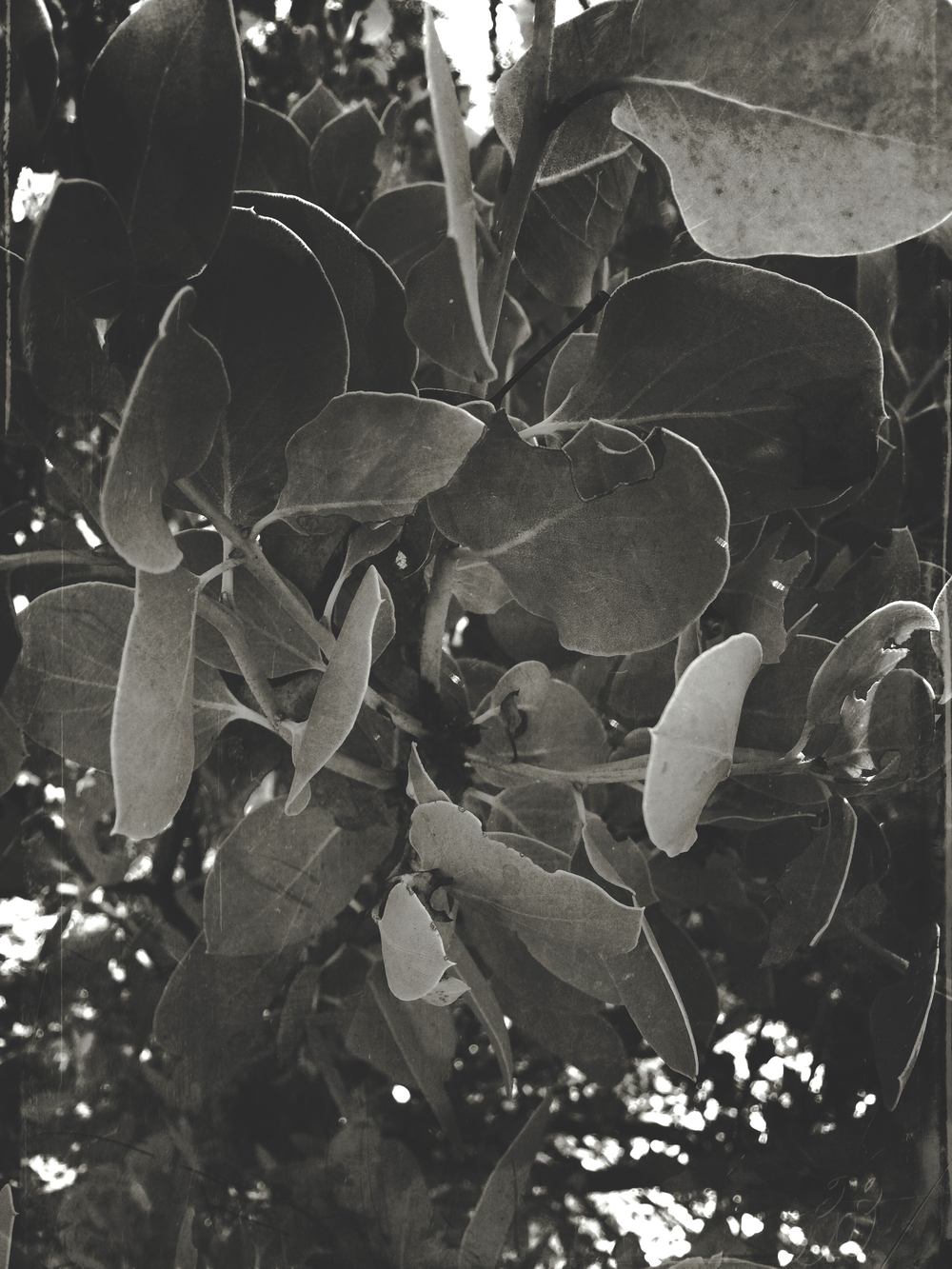 Secret Garden - 10.jpg
