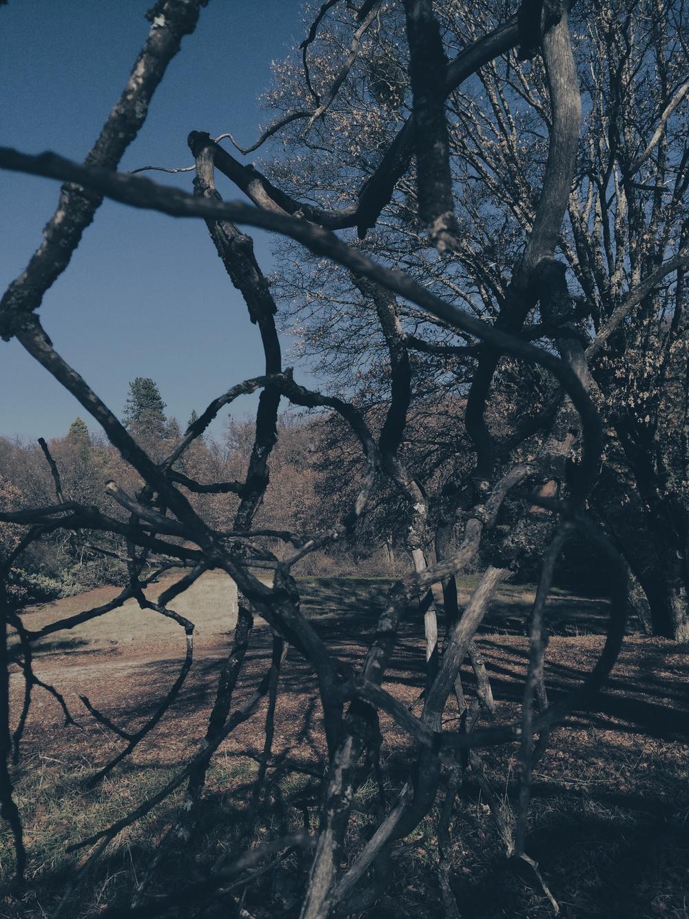 Secret Garden - 21.jpg