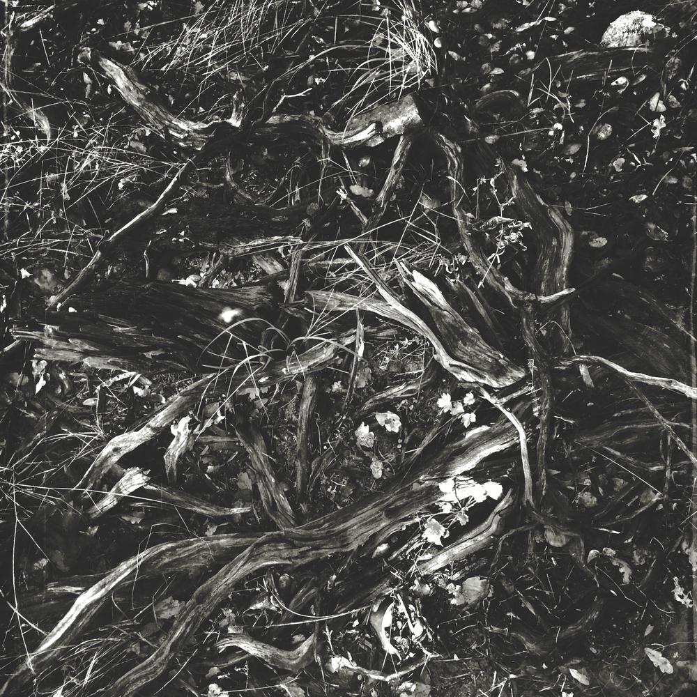 Secret Garden - 24.jpg