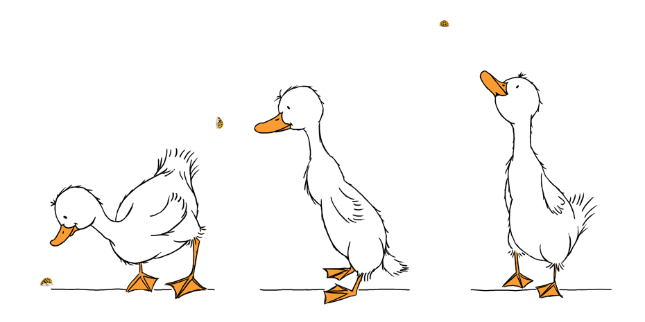 Curious_Ducks_Illustration_STUDIOALSJEBLIEFT