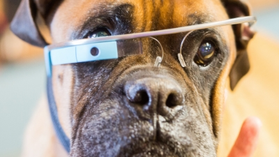 pet-wearables-hed-2015_0.jpg