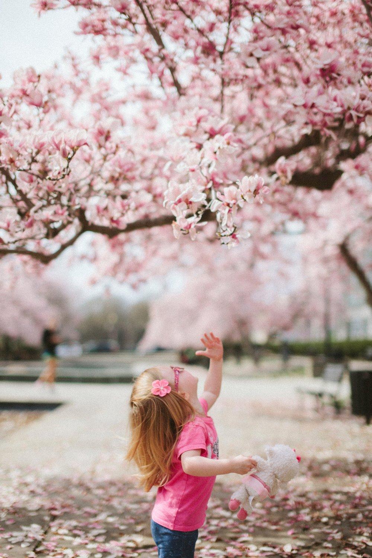 Cherry Blossom rencontres asiatique rencontrer