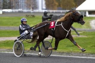 Calypso H. og Rune Wiig jakter sin 10.seier på norsk jord. Foto: Hesteguiden.com.