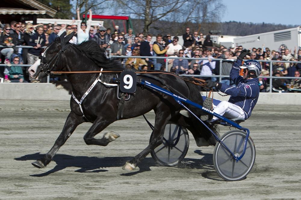 Under sommertravet 22.-23.juli håper vi å se Tekno Odin forsøke og forsvare NM-tittelen på hjemmebane. Foto: Hesteguiden.com.