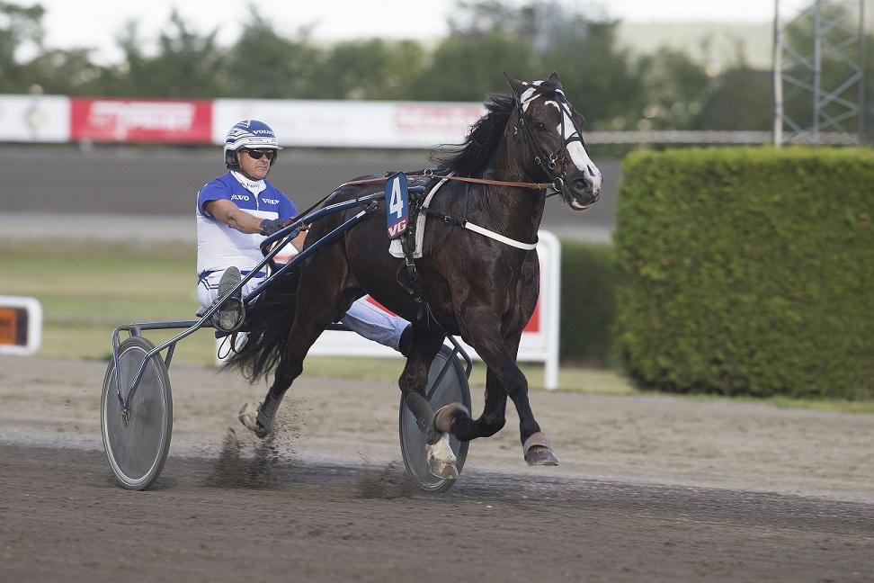 Philip Rex (bildet) er blant de 15 hestene som kjemper om førstepremien i ungdoms-, dame- og amatørløpet på Sørlandet søndag. Foto: Hesteguiden.com.