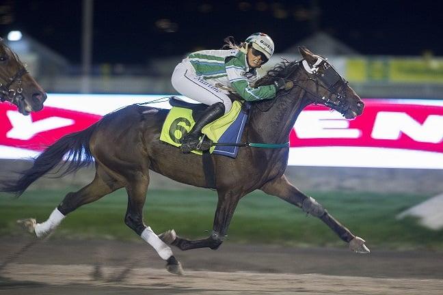 "B.B. Photo vant hele seks monteløp i 2015, og er selvsagt nominert i kategorien ""Årets montehest"" under hestegallaen 5.mars. Foto: Hesteguiden.com."