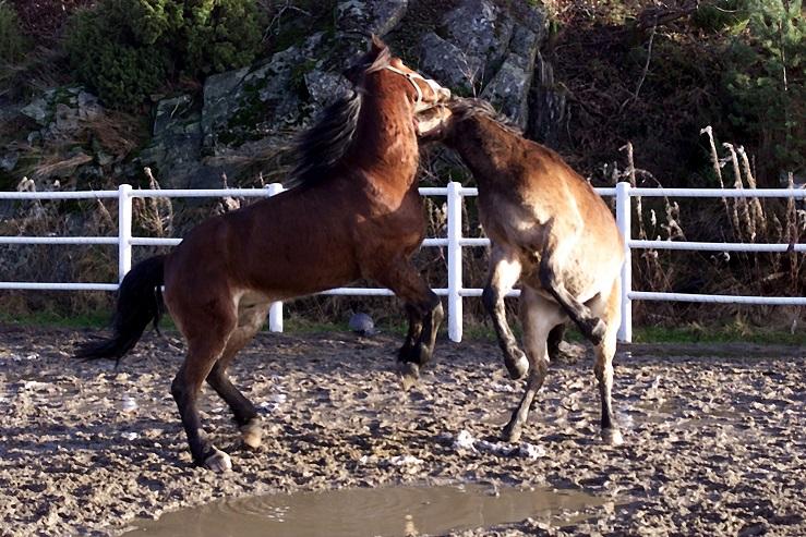 Illustrasjonsfoto. Hestene på bildet har ingenting med saken å gjøre. Foto: Hesteguiden.com.