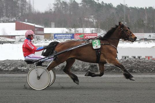 Rigel Storm er oppdrettet, eid og trent av Arild Salte fra Mykland. Her vinner han V75-1 sammen med Åsbjørn Tengsareid.