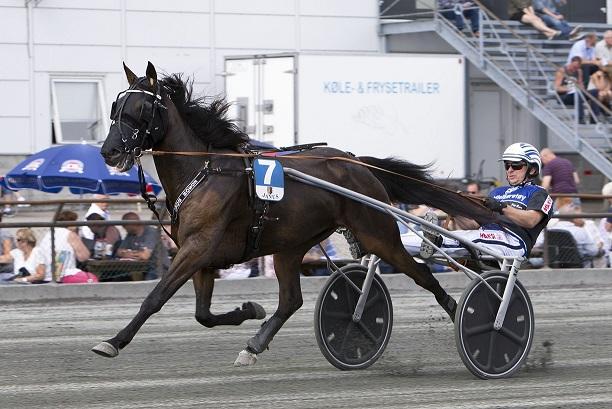 Edson Boko (bildet) er en av hestene som i dag har plass på ungdomsstallen på Sørlandets Travpark. Foto: Hesteguiden.com.
