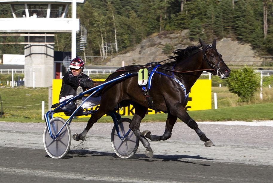 Slik så det ut da Viking Va Bene og Geir Vegard Gundersen tok hjem Kristen T. Gundersens Æresløp i fjor. Foto: Hesteguiden.com.
