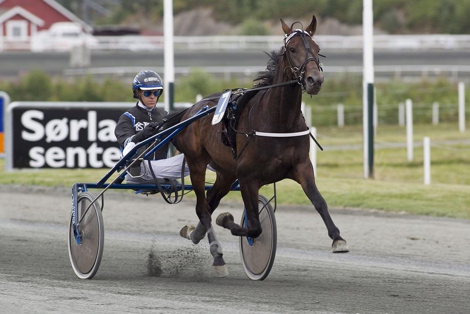 Geir Mikkelsen jakter seier i Kristen T. Gundersens æresløp med Sejr Gammelsbæk lørdag. Foto: Hesteguiden.com.