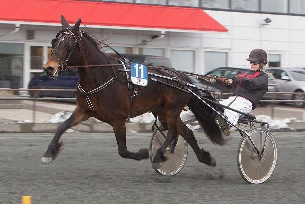 Will Lita er en av de lokale hestene som satser mot V75-dagen i Travparken lørdag 12.november. Det settes opp busser fra både Aust- og Vest-Agder. Foto: Hesteguiden.com.