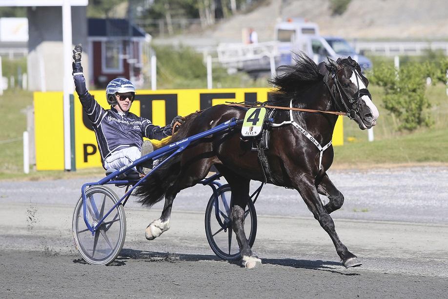 Tekno Odin jakter sin 69.seier i karrieren på hjemmebane søndag. Foto: Hesteguiden.com.