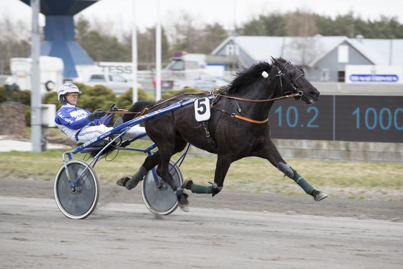 Chellas Girl og Vidar Hop bombet rundt Jarlsberg-ovalen på 1.13,3a/1609 meter i årsdebuten. Foto: Hesteguiden.com.