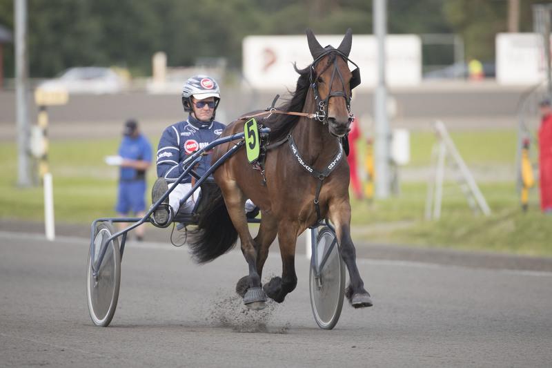 Eikronja (bildet) sørget for jubel for andelslaget bestående av ni eiere fra og rundt Eiken Travklubb. Foto: Hesteguiden.com.