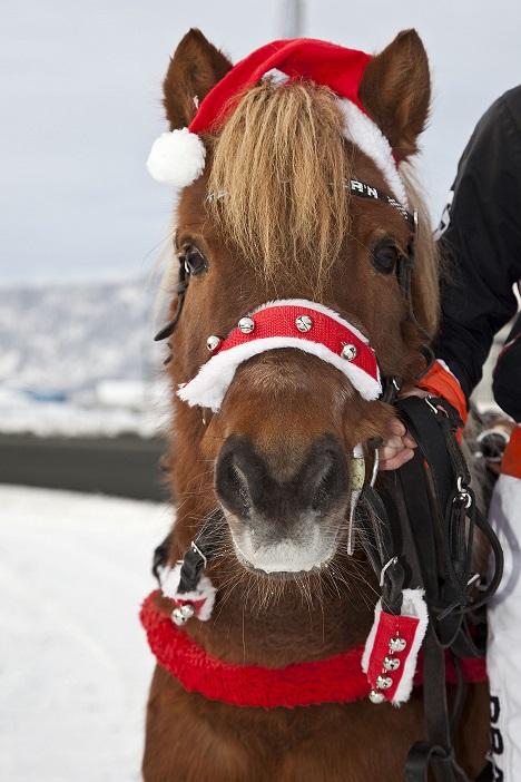 Under V75-arrangementet lørdag blir det både juleverksted og ponniaktiviteter for barna. Foto: Richard Ekhaugen.