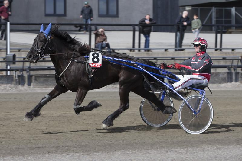 Seiersvante Troll Svenn skal godkjennes for monté på hjemmebane søndag. Foto: Hesteguiden.com.