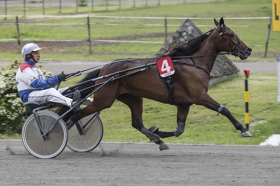 Special Edition og Lars Anvar Kolle fra debutløpet på Klosterskogen i juni. Det endte med galopp. Foto: Hesteguiden.com.
