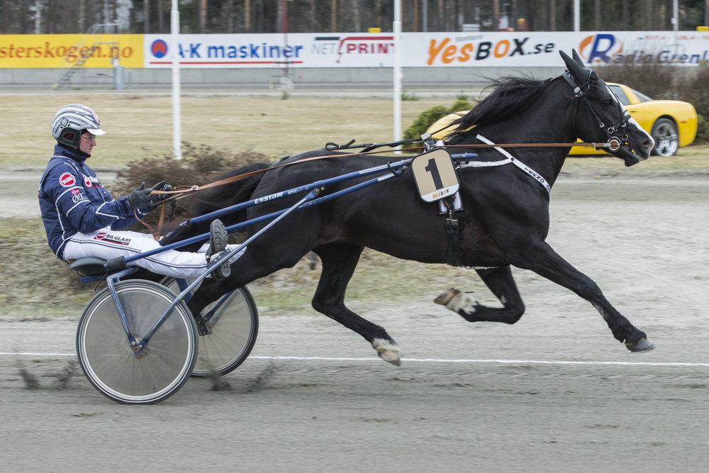 Selveste Tekno Odin blir å se på hjemmebanen Sørlandets Travpark på søndag. Foto: Hesteguiden.com.