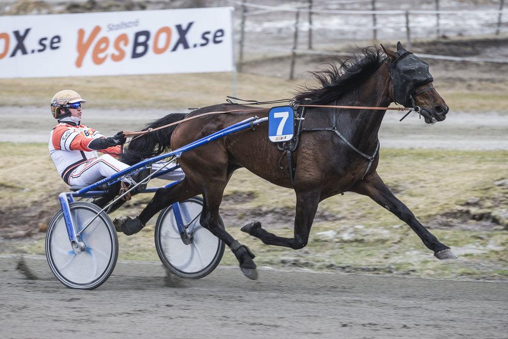 Cromwells Shadow imponerte i siste seiersløp 19.april fra tet sammen med Lars Fredrik Kolle. Torsdag har Søgne-hesten et perfekt startspor i V5-4. Foto: Hesteguiden.com.