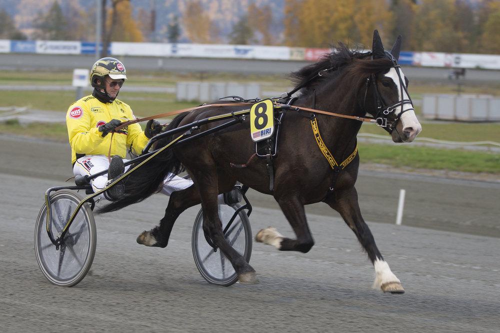 Vestpol Kongen og Øystein Tjomsland dukker opp i V65-finalen. Foto: Hesteguiden.com.