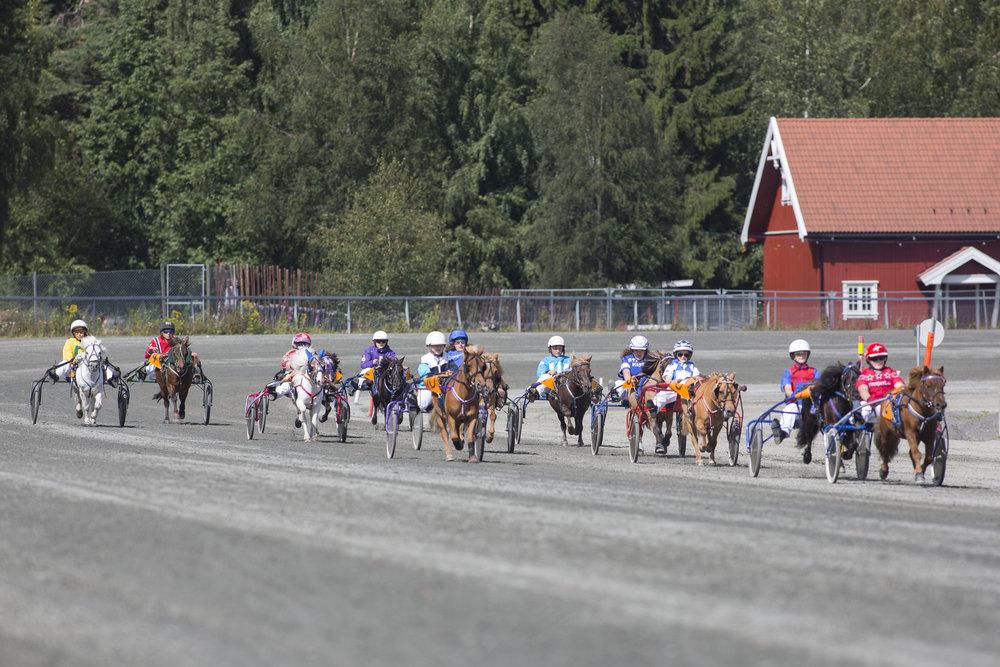 Hele 16 hester var meldt til sesongfinalene for ponnier på søndag. Foto: Hesteguiden.com.