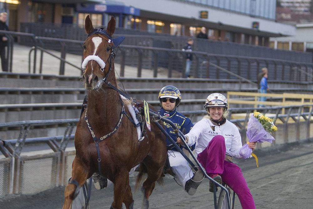Søndag gjør 12 år gamle Bar Story sin 146. og siste fremtreden i løpsbanen. Foto: Hesteguiden.com.