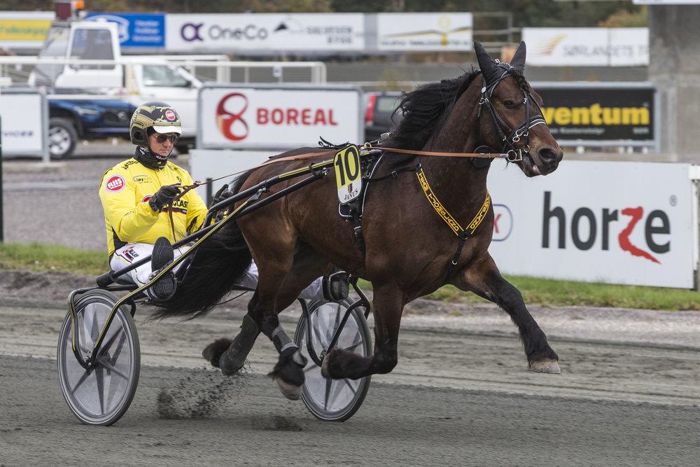 Ubeseirede Lesja Odin angripes fra alle sørlandskanter i V65-1 i jakten på karrierens 13.triumf. Foto: Hesteguiden.com.