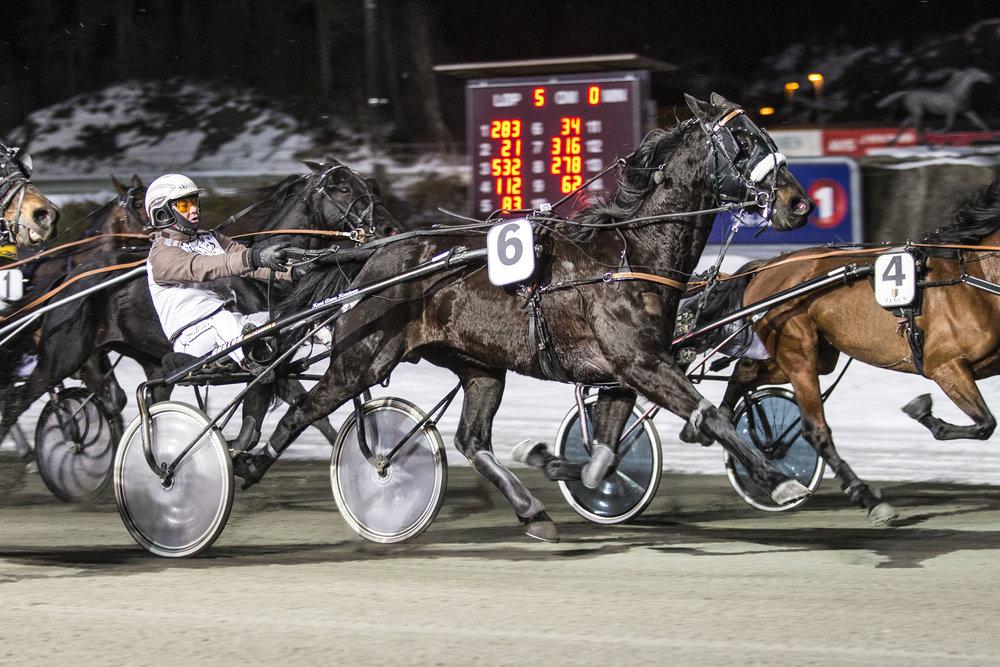 Birkeland-hesten Wayne Brogård i kjent stil; først på målstreken. Foto: Hesteguiden.com.