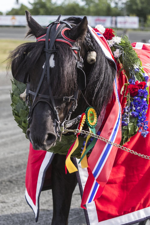 Årets vinnere av Sørlandsmesterskapet kan glede seg over flotte laurbærkranser. Her er fjorårets NM-vinner Odd Herakles avbildet. Foto: Hesteguiden.com.