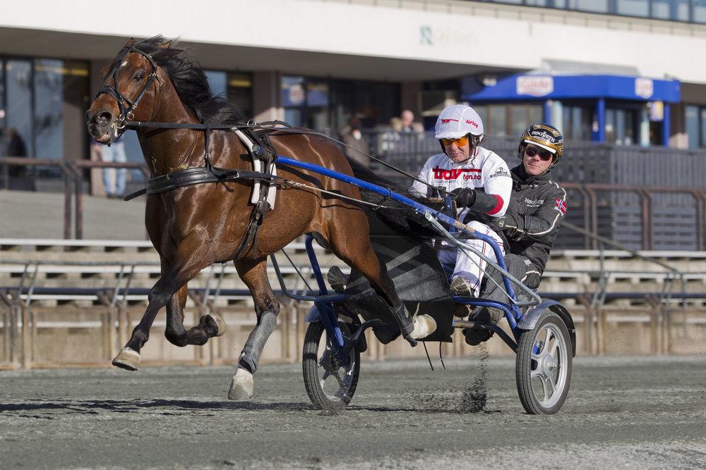 Charter-Svein i flott driv i tandemsulky. Lørdag får to av våre gjester muligheten til en heftig tur bak en stor travhest. Foto: Hesteguiden.com.