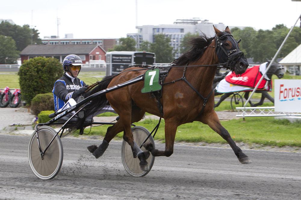 Julia Early fra Søgne var den hesten som hadde flest starter på Sørlandets Travpark under Ford Bay Auto-touren. Nå venter utenlandstur på eier Ole Fr. Nodeland og 17 andre hesteeiere. Foto: Hesteguiden.com.
