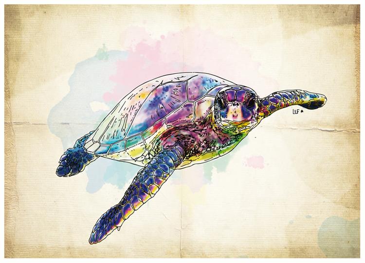 lilylafronde-carte-postale-tortue.jpg