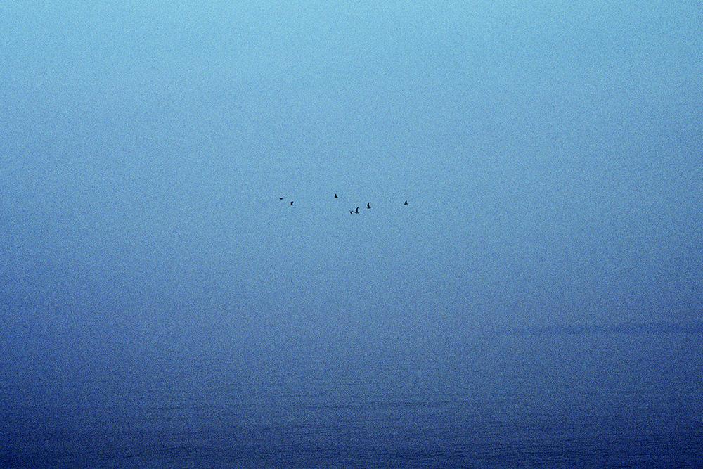 natura-migrante-01.jpg