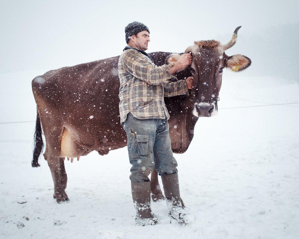 Contadino con mucca nella neve, Schlatt-Haslen (AI-CH 2017)
