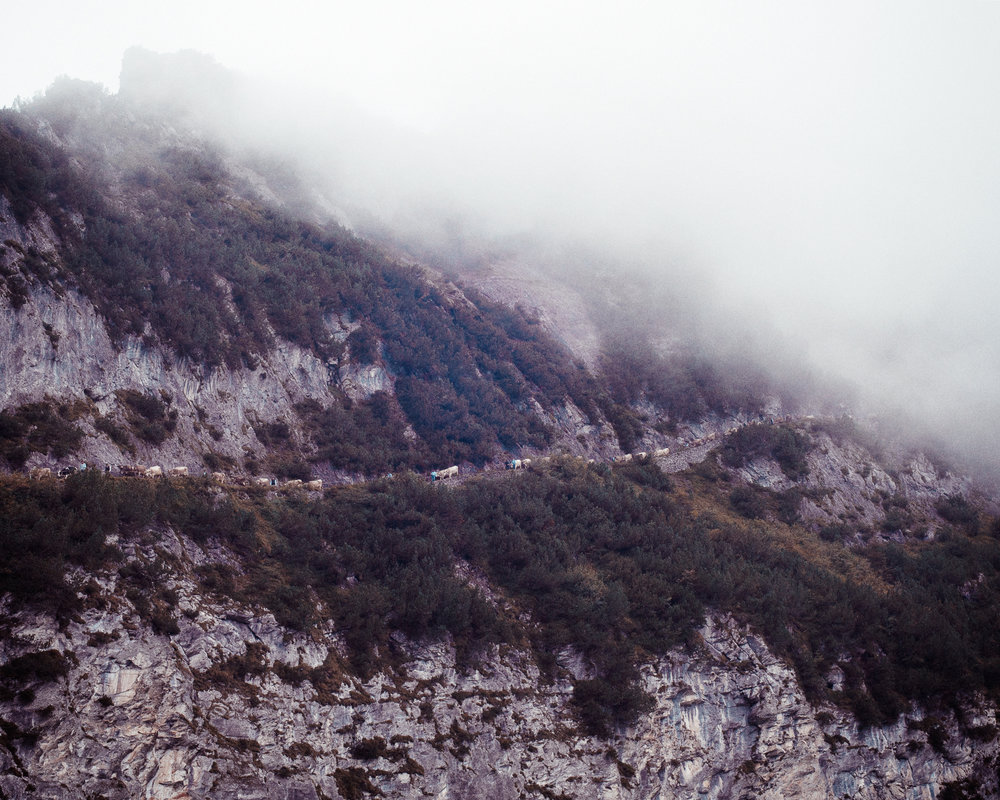 Alpabzug, Bargis-Flims (GR-CH 2016)