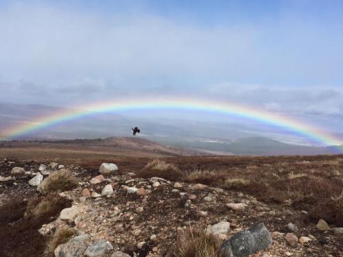 Grouse Shooting Scotland