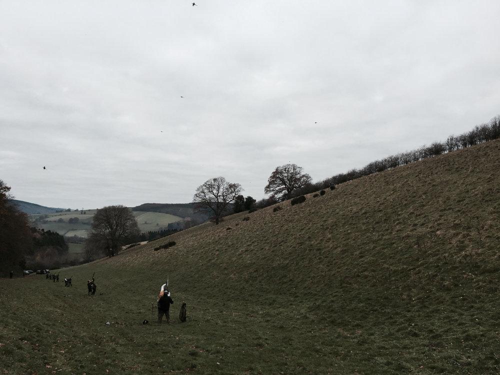 Pheasant Shooting Shropshire