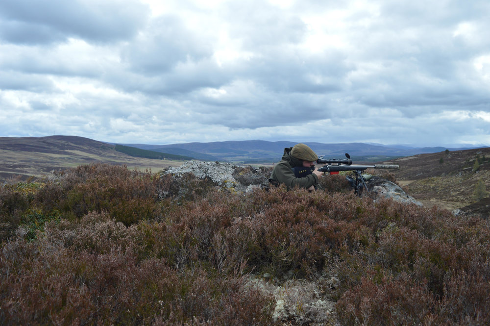 Stalking Cairngorms