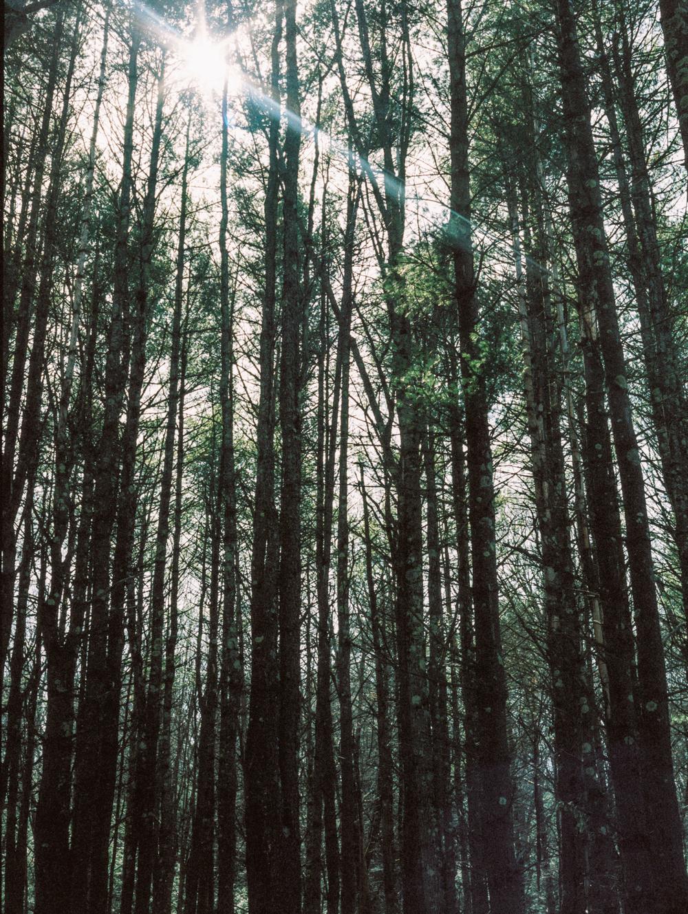 Catamount State Forest  //  Kodak Portra 400
