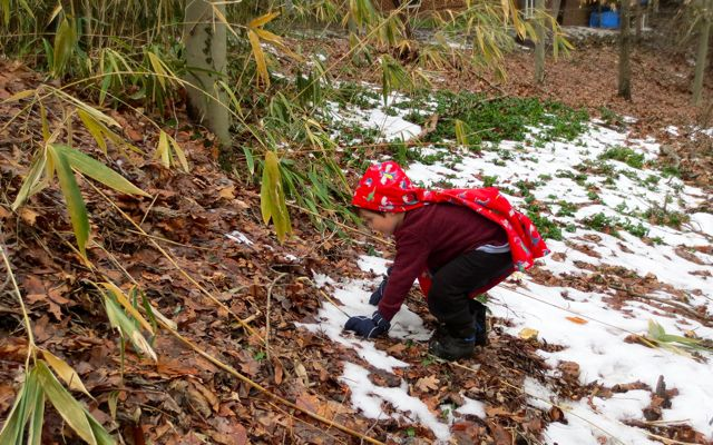 Snow melt layered on leaves and mud, provide another sensation for balancing and climbing.