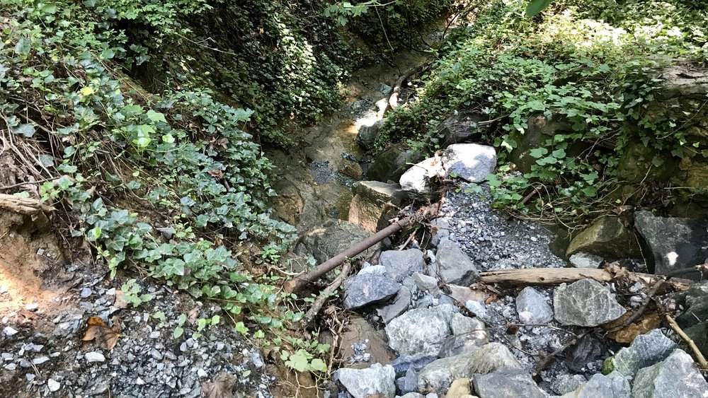 The Gray Rock ravine has the trickle of water!