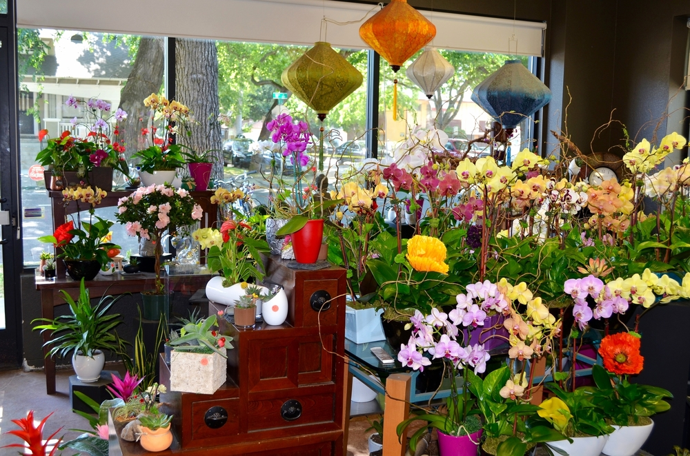 Great Selection of Orchids