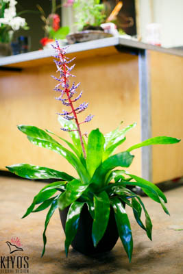 Bromeliad #2
