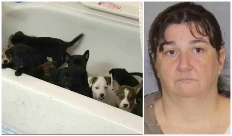 Dog rescue fraudpuppes1.0.jpg