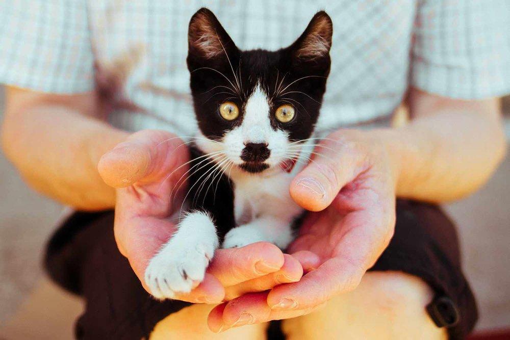 Hands Holding Cat