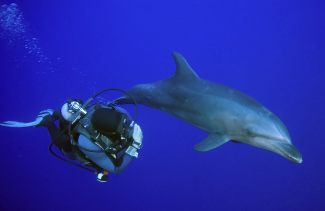 scuba-diving-with-dolphins.jpg