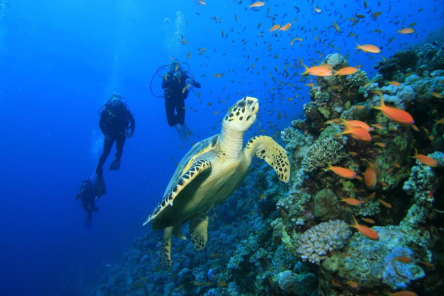 Scuba-Dive-Cozumel-Reefs.jpg